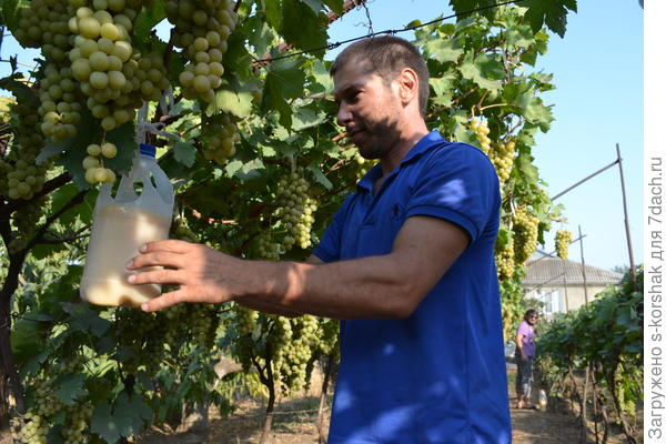 Репелленты против птиц на винограде