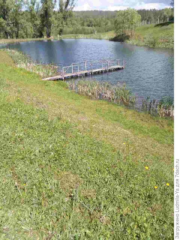 23. Деревенский пруд - в шаговой доступности - за нижней границей нашего участка. Фото просто для настроения, для подтверждения окружающей нас красоты