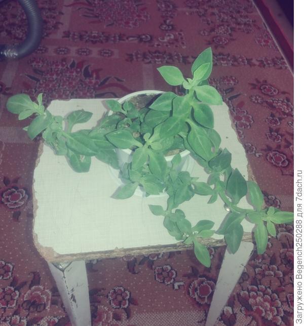 Подскажите пожалуйста как называется это растения?