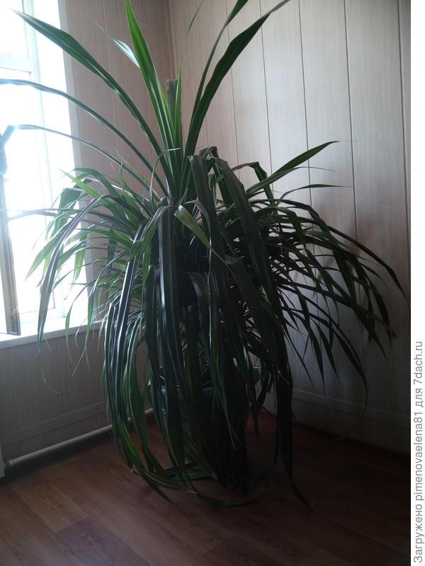 Подскажите что за растение пожалуйста?