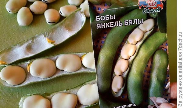 Янкель Бялы - бобы на семена