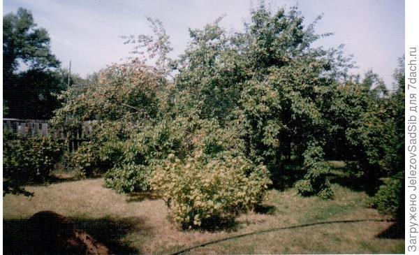 Фото сделано лет 20-25 назад. В саду Валерия Железова