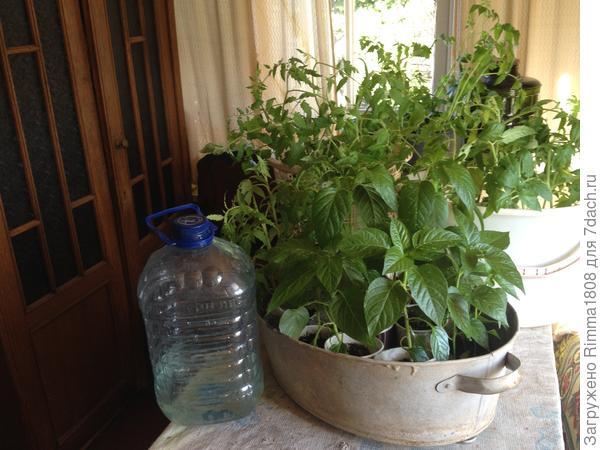 Для томатов-индетов необходима высокая тара