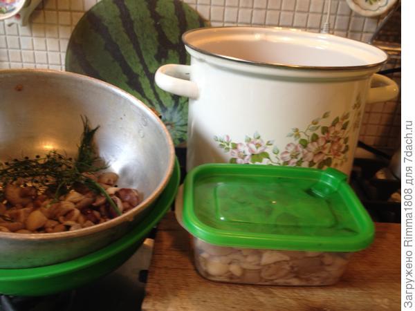 Заготовки из маслят на зиму: 2 рецепта для заморозки