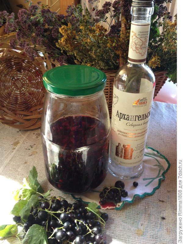 Черносмородиновая наливочка; Дамская услада; пошаговый рецепт приготовления с фото