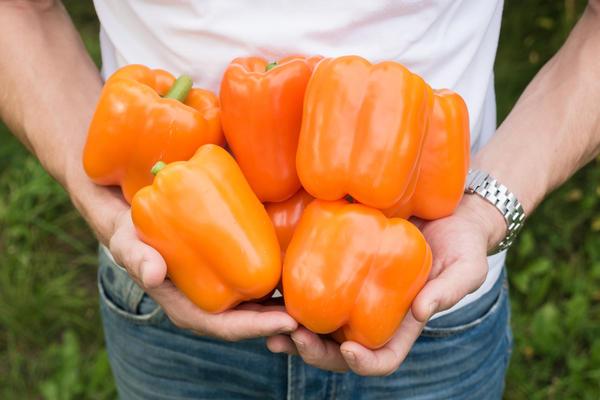 Перец от агрофирмы Партнер: 5 толстостенных гибридов