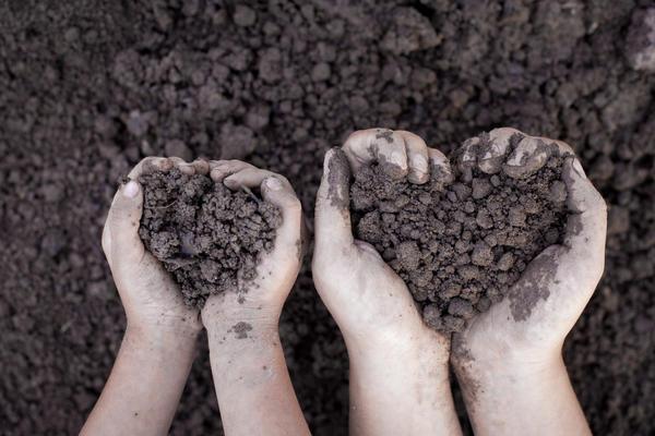 А вы знаете, какая почва на вашем участке?