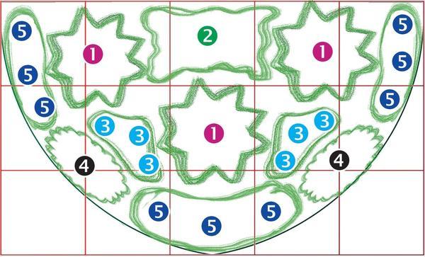 План цветника: 1 - посконник; 2 - подсолнечник; 3 - схизахириум; 4 - астра; 5 - эхинацея