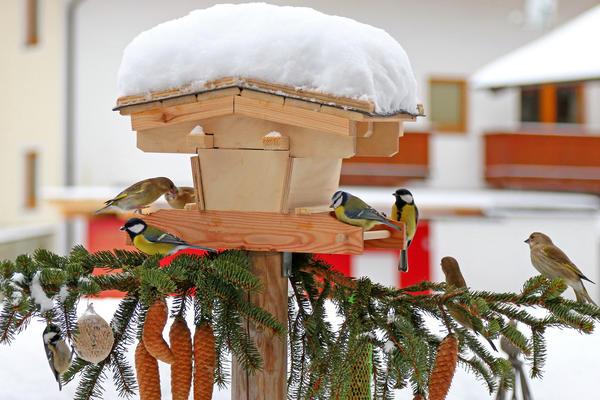 Привлечь птиц в сад помогут и кормушки