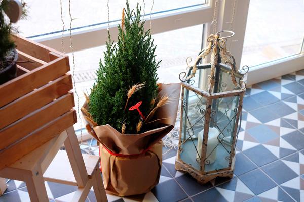 Чтобы продлить жизнь растения в горшке, на ночь его необходимо перемещать в более комфортные условия - на прохладный пол у панорамных дверей, либо на подоконник