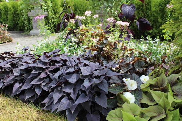 Растения с темной листвой располагайте на переднем плане