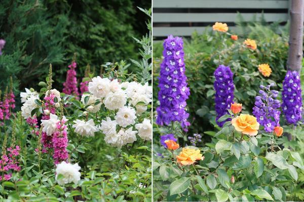 В качестве партнеров - растения с крупными вертикальными соцветиями