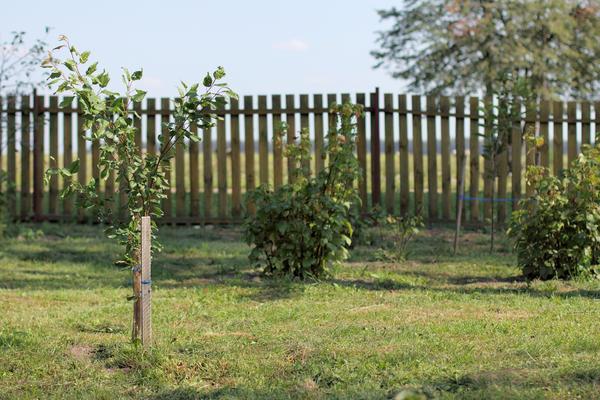Оставляйте столько свободного места, сколько необходимо будет взрослому растению