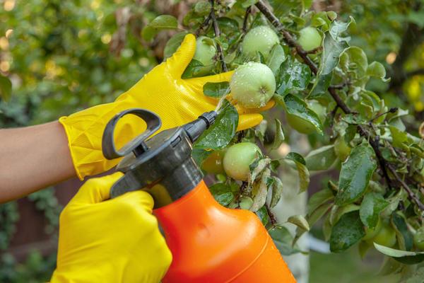 Обработки помогают сберечь урожай ягод и фруктов