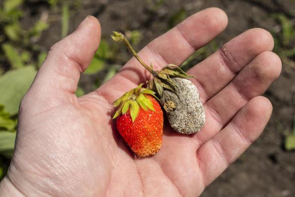 Какие заболевания сохраняются в почве?