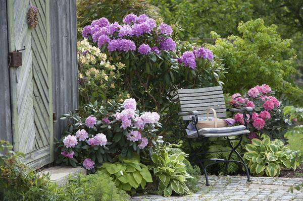 Мой прекрасный сад в июле