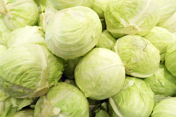 Калийная подкормка повысит лежкость и вкусовые качества позднеспелой капусты