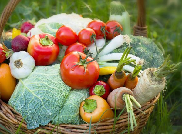 Каждый хочет вырастить свои экологически чистые овощи и фрукты