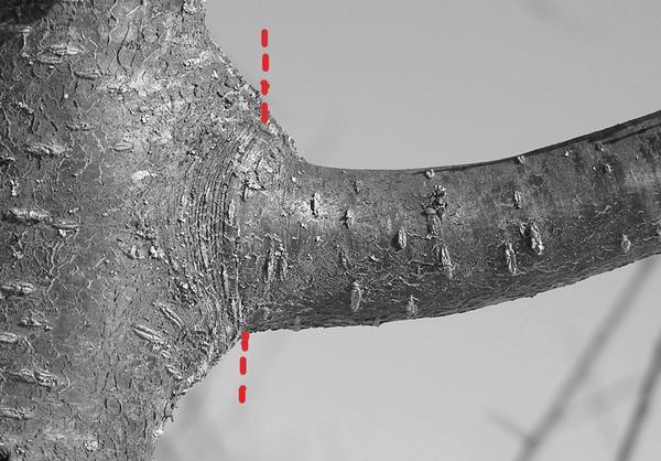 Как правильно обрезать плодовые деревья: 10 советов от Николая Курдюмова