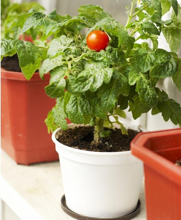 Домашний огород сажают не ради большого урожая