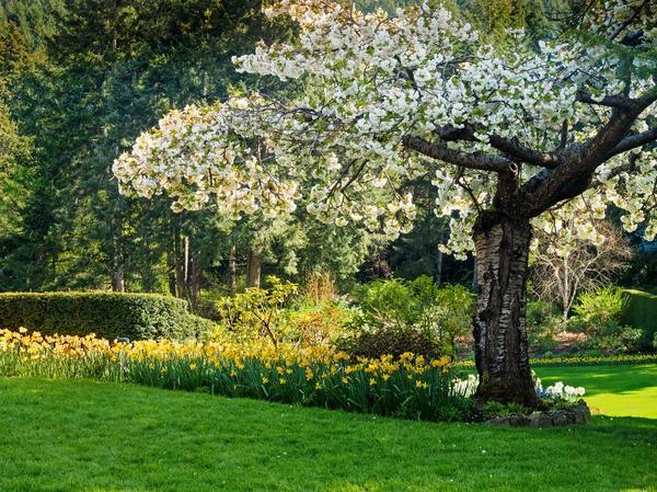Что посадить под плодовыми деревьями?