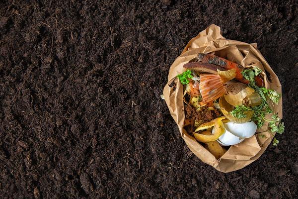 Червяки с удовольствием съедят все пищевые отходы, однако мясные и рыбные лучше им не скармливать: будет дурно пахнуть