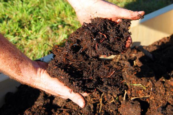 Выращенных за зиму червей заселяют в компостную кучу