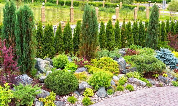 Хвойные создают идеальный фон для кустарников с эффектными соцветиями и яркой листвой