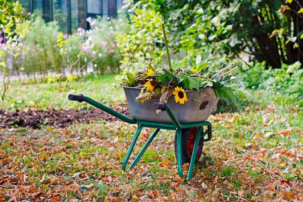 Чтобы продлить цветение до осени, удаляйте увядающие цветки