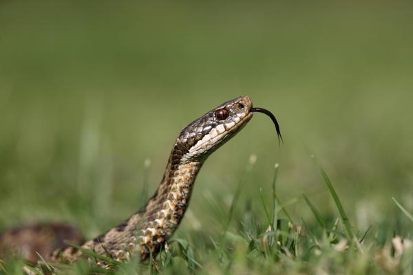 Как отвадить змей?