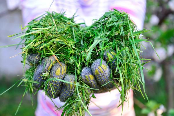 Подсохшая измельченная трава станет прекрасным удобрением