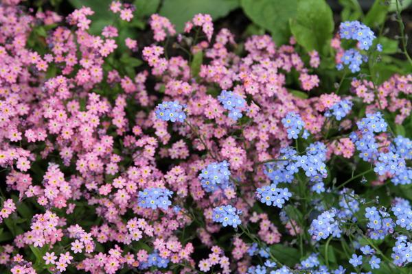 Незабываемый цветок