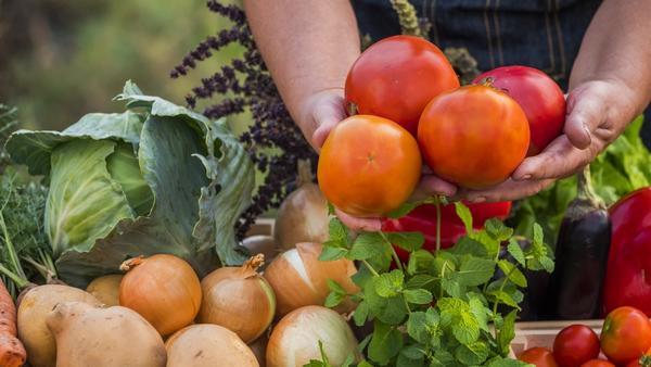 Как выращивают органическую продукцию и чем она так хороша?