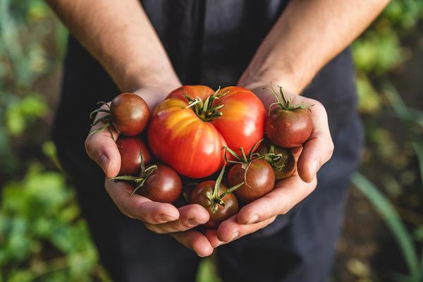 Присоединяйтесь к Клубу любителей органического земледелия