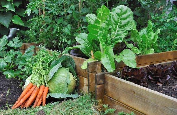 Как перейти на органическое живое земледелие?