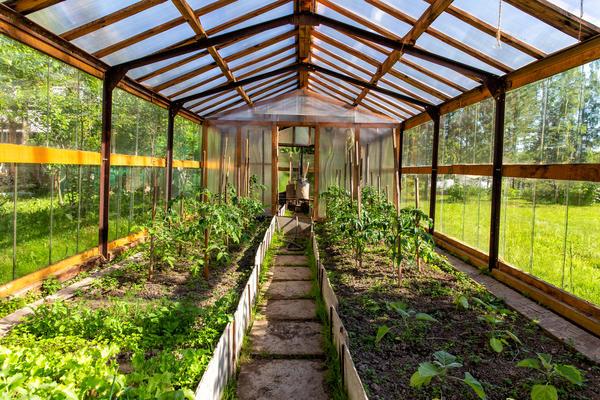 Здоровый урожай в теплице - без грамма химии и синтетики