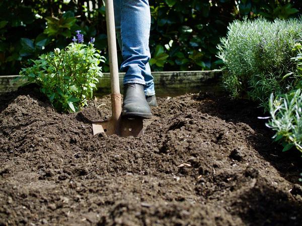 Как восстановить плодородие почвы с помощью приемов органического земледелия
