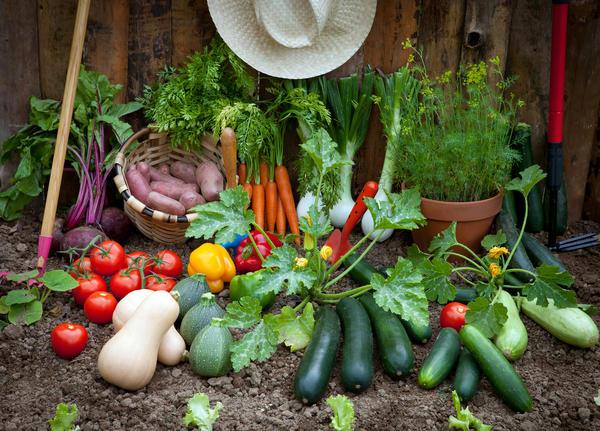 Свои овощи и фрукты можно вырастить на всем натуральном