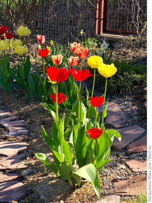 Осенняя посадка тюльпанов. Повторение пройденного