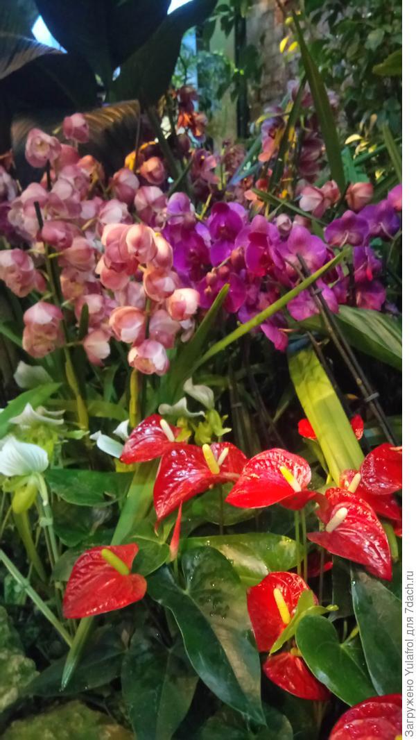 Орхидеи и не только