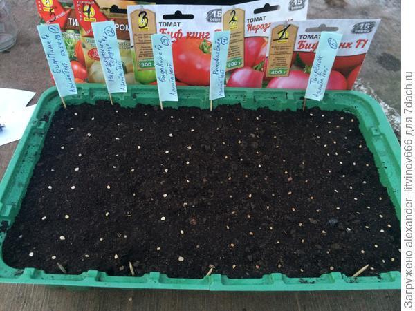 Посев томата на рассаду
