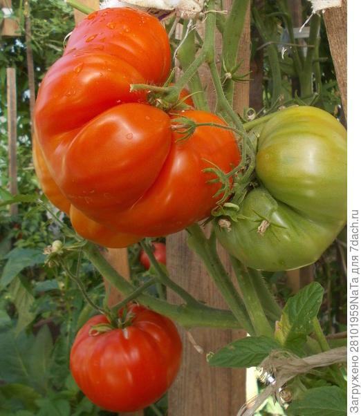 Наш сад, огород - это витамины круглый год!