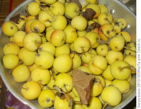 Курица, запеченная в сметане с яблоками - пошаговый рецепт приготовления с фото
