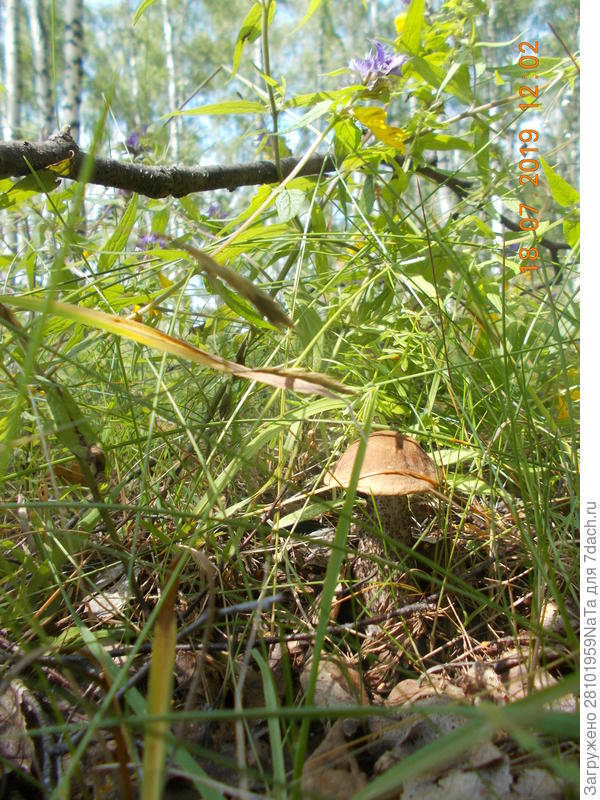 Лесные грибы - польза для моих растений
