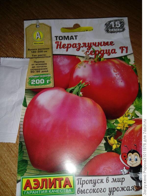 Вот семянки томатика