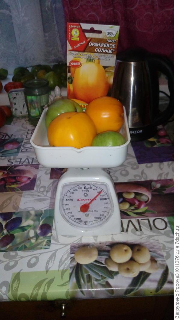 Я томат 'Оранжевое солнце' посажу и всех томатиками угощу