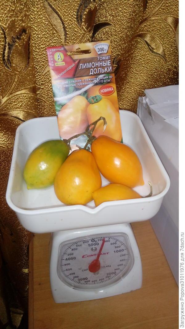 Томат 'Лимонные дольки'. Итоговый отчет