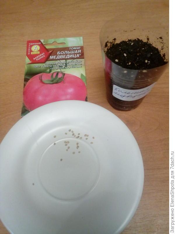 посев сухими семенами