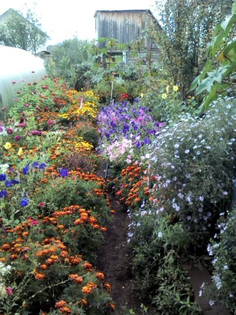 наша тропинка по саду