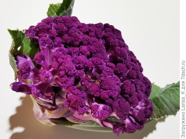 Цветная капуста 'Фиолетовый шар' F1. Итоги